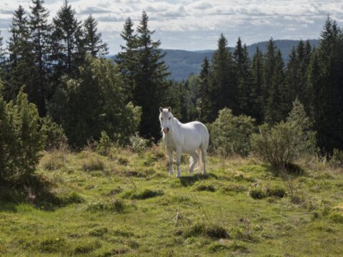 mötesplatser för äldre i nora- skog